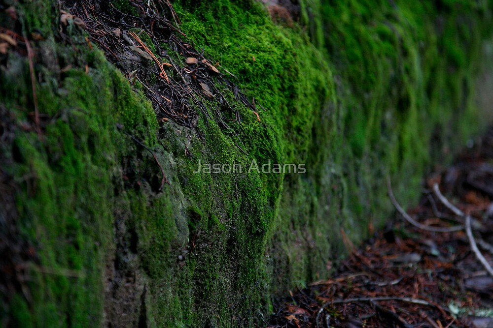 Moss by Jason Adams
