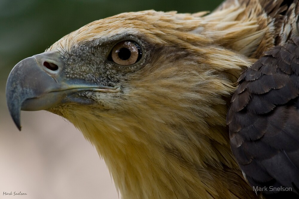 Eagle 1 by Mark Snelson