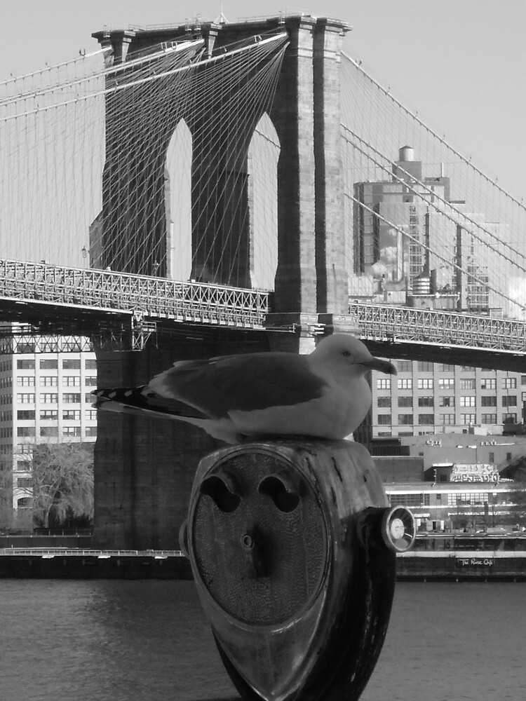 Brooklyn Bird by grimbomid