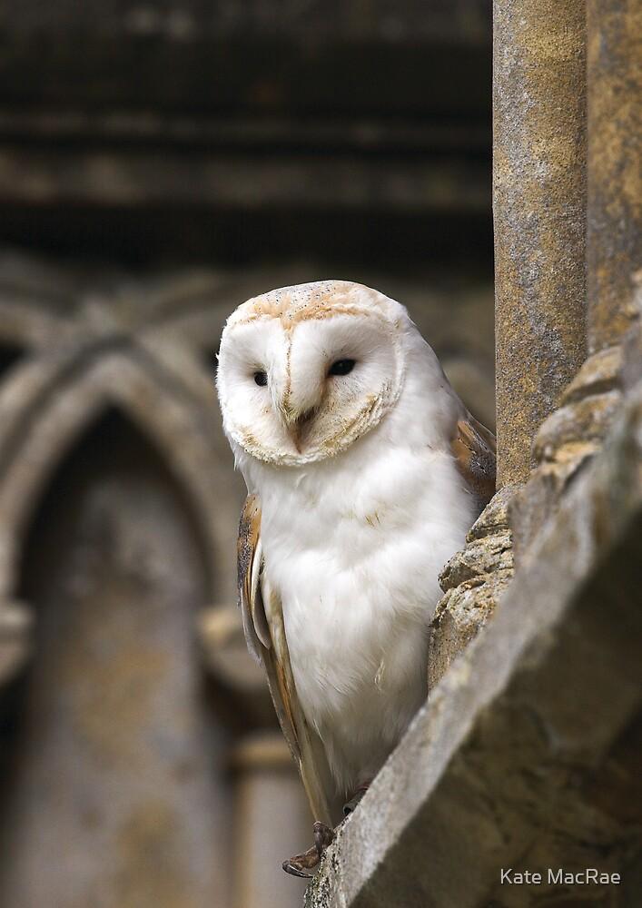 Barn Owl by Kate MacRae