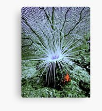 SOME SIEVE ~ SOME STING! Canvas Print