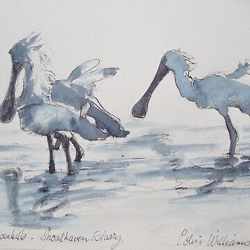 Royal Spoonbills - my favourite bird. by ColinWilliams