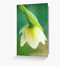 Demure Daffodil Greeting Card