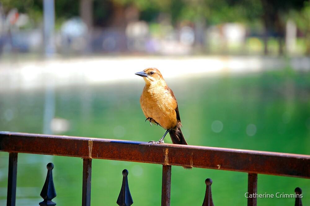 ballerina bird by Catherine Crimmins