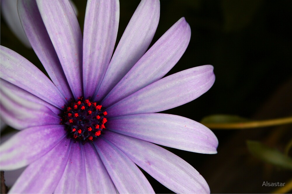 Colour Me Purple by Alsastar