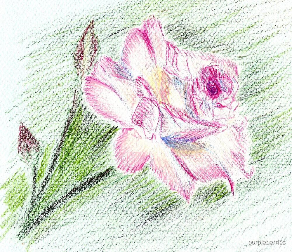 Rose by purpleberries