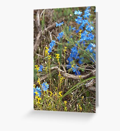 Lechenaultia and Branch Greeting Card
