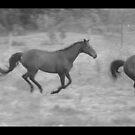Horse Run by Gwenda  Harvey