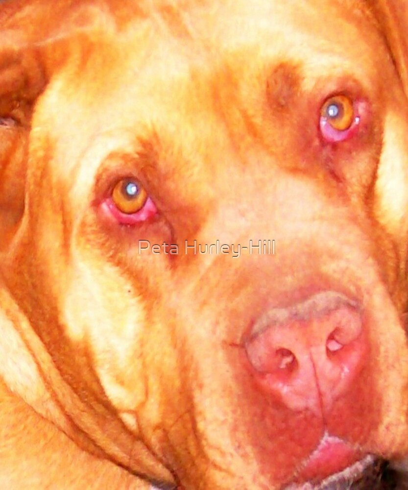 big dog by Peta Hurley-Hill