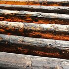 Semi Abstract - Timber Fence Poles by Lexa Harpell