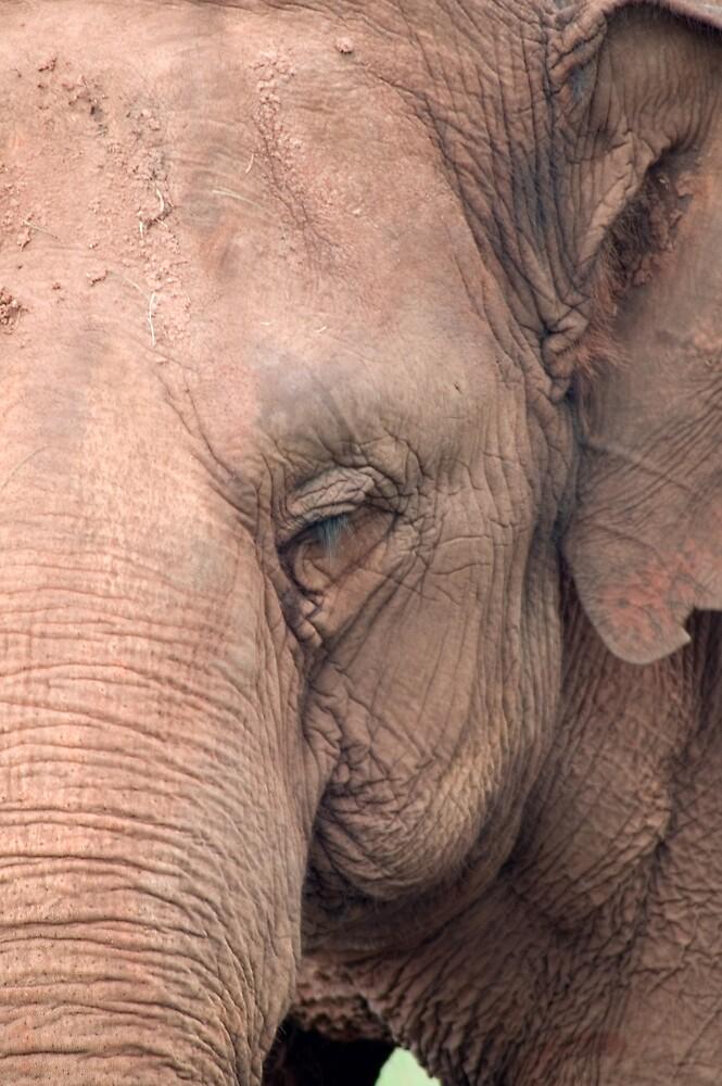 Elephant by Judy Harland