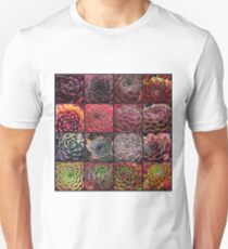 Sempervivum Collage Herbst - Hauswurz, Dachwurz T-Shirt