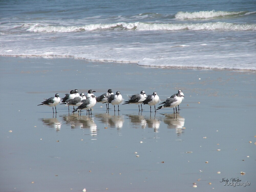 The Gull Gang by Judy Gayle Waller