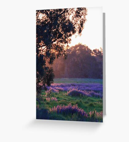 Pattersons Purple Weed At Sunset Greeting Card