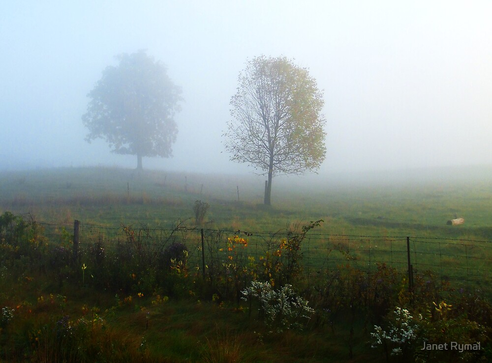 Misty Morning Trees by Janet Rymal