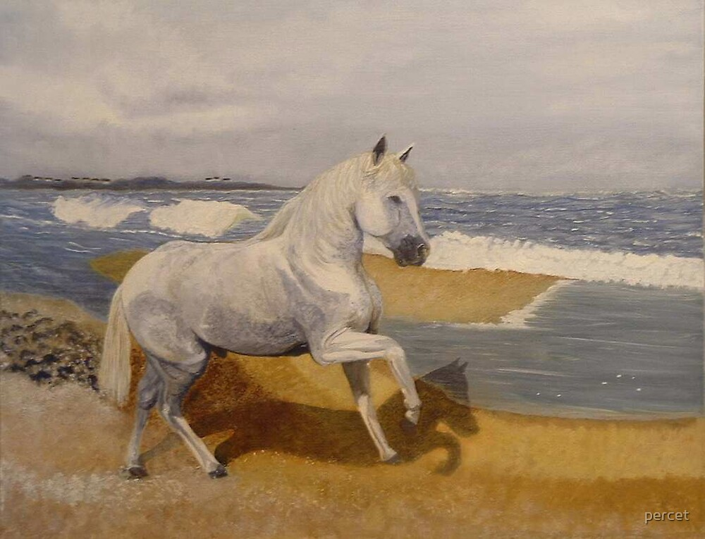 white horse run free  by percet