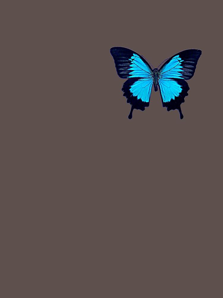 Ulysses (Papilio Ulysses)   by amorphousbeing