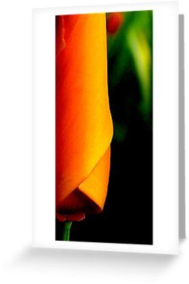 California Poppy by Carmen Hellofs