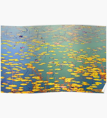 The Golden Lilly Pond Poster