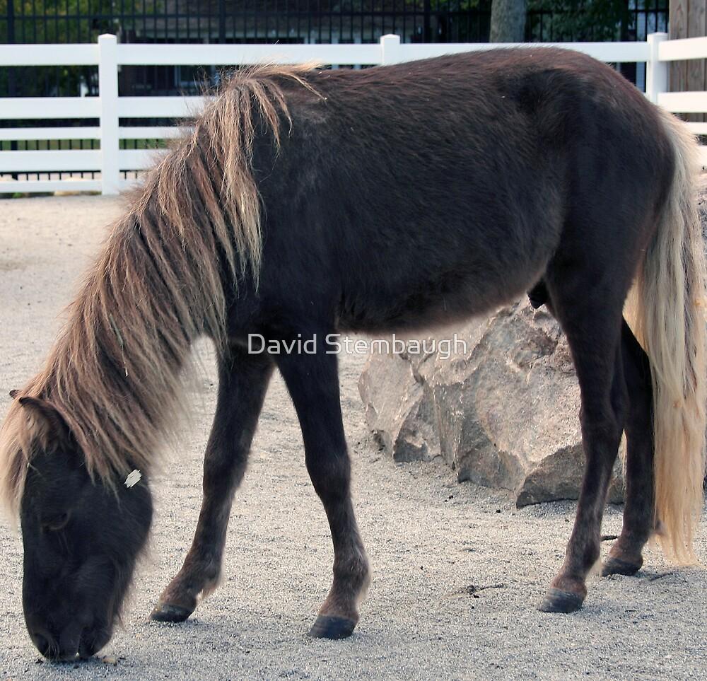 pony by David Stembaugh