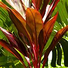 Tropical vibe  by Margaret Stanton