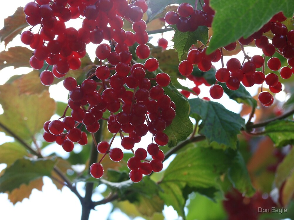 Berries by Don Eagle