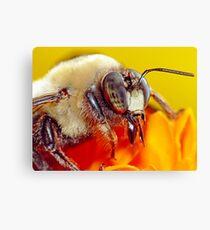 Bee Still (2)! Canvas Print