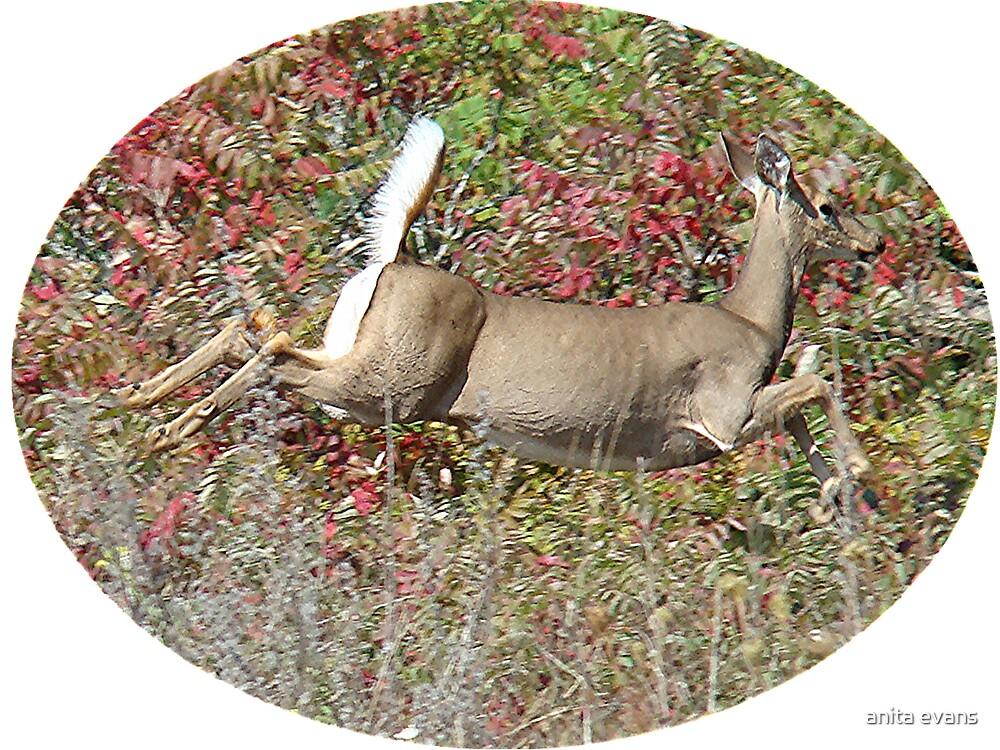 deer by anita evans