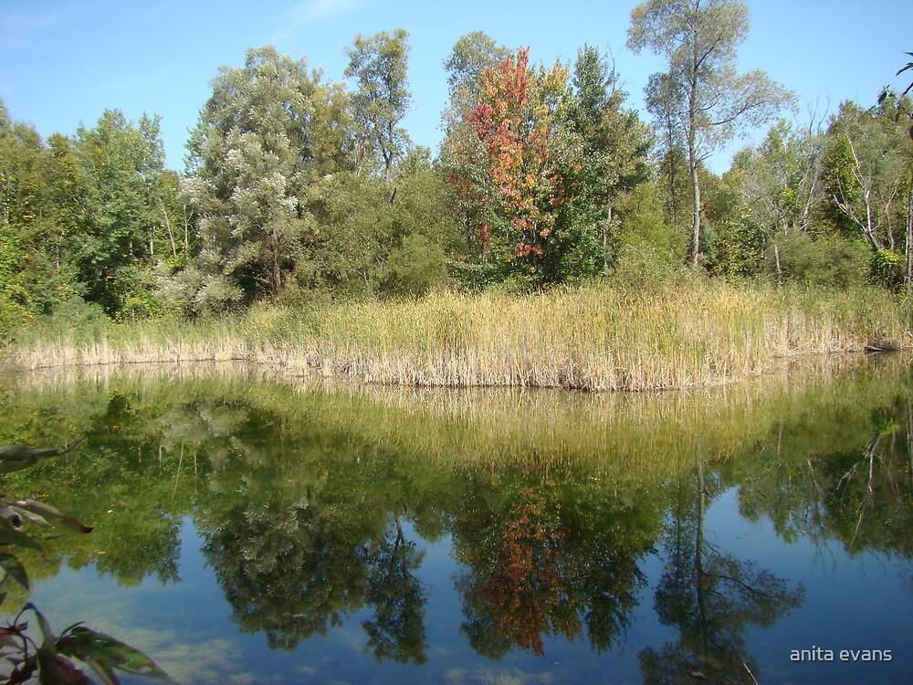 pond by anita evans