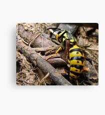 Wasp in the sticks Canvas Print