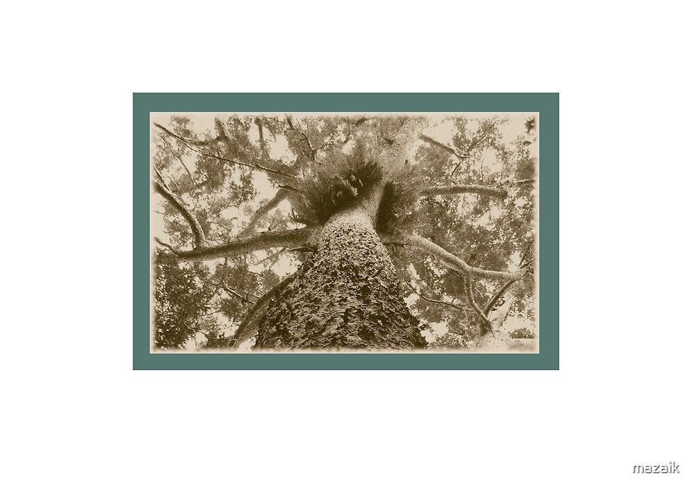 Kaori Pine by mazaik