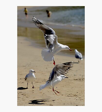 "Dance of the Sugarplum ""Seagulls"" Photographic Print"