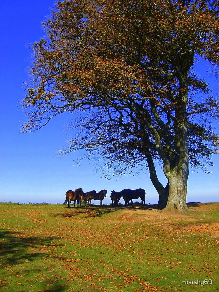 Exmoor Ponies by marshy69