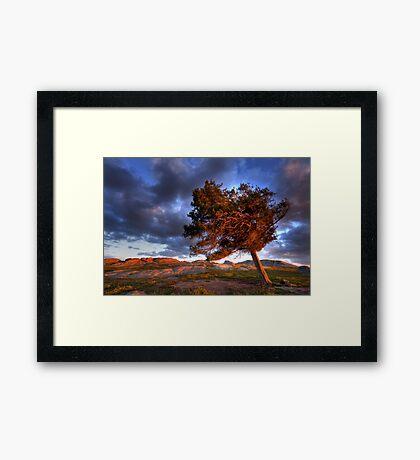 Late Light Framed Print