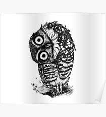 Bernie the Borrowing Owl Poster