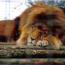 Sleeping lord by moonstone