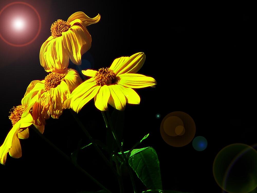 Yellow Flowers! by ashleymaiwoo