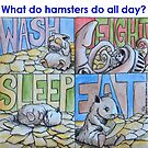 What do hamsters do all day? by Byron  McBride