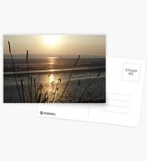 Grassess in the evening light Postcards