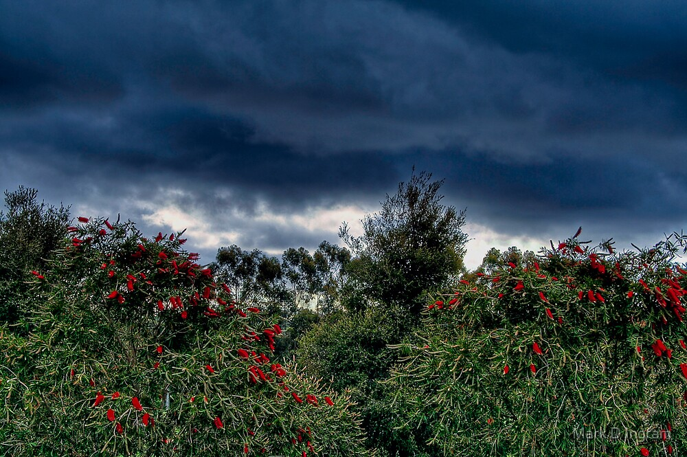 Bush Sky by Mark D Ingram