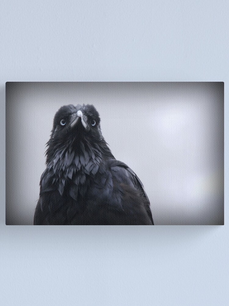 Alternate view of Crow protector Canvas Print