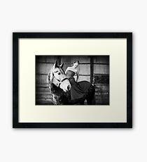 Fashion Horse Framed Print