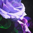 Shades of Purple by spike
