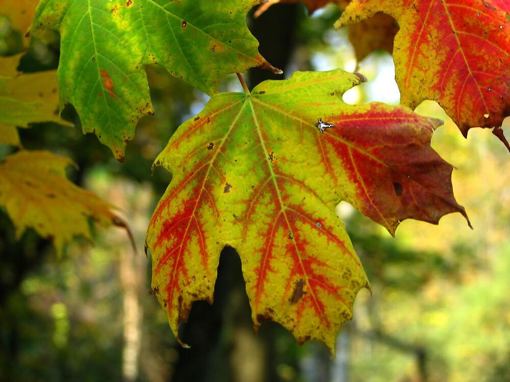 Bleeding Leaf by ashleymaiwoo