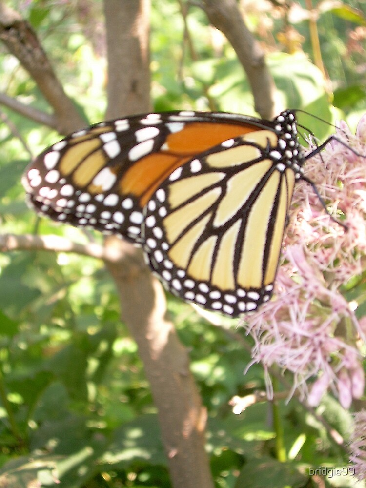 Monarch butterfly by bridgie99