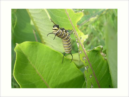 Caterpillar by bridgie99