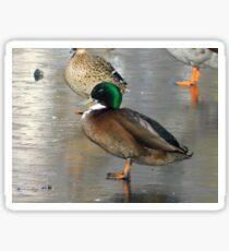 Mallard Duck Standing on Ice Sticker