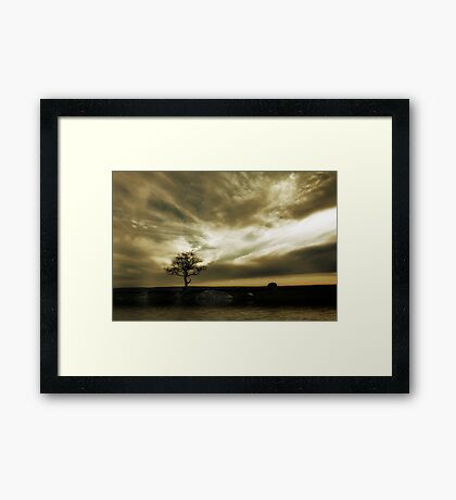 Tree Solitude Framed Print