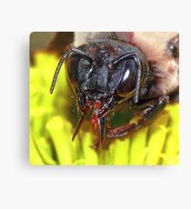Carpenter Bee ! Canvas Print