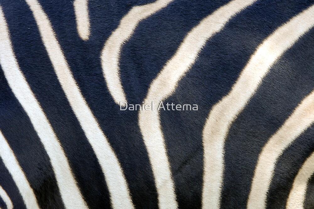 Zebra Stripes by Daniel Attema
